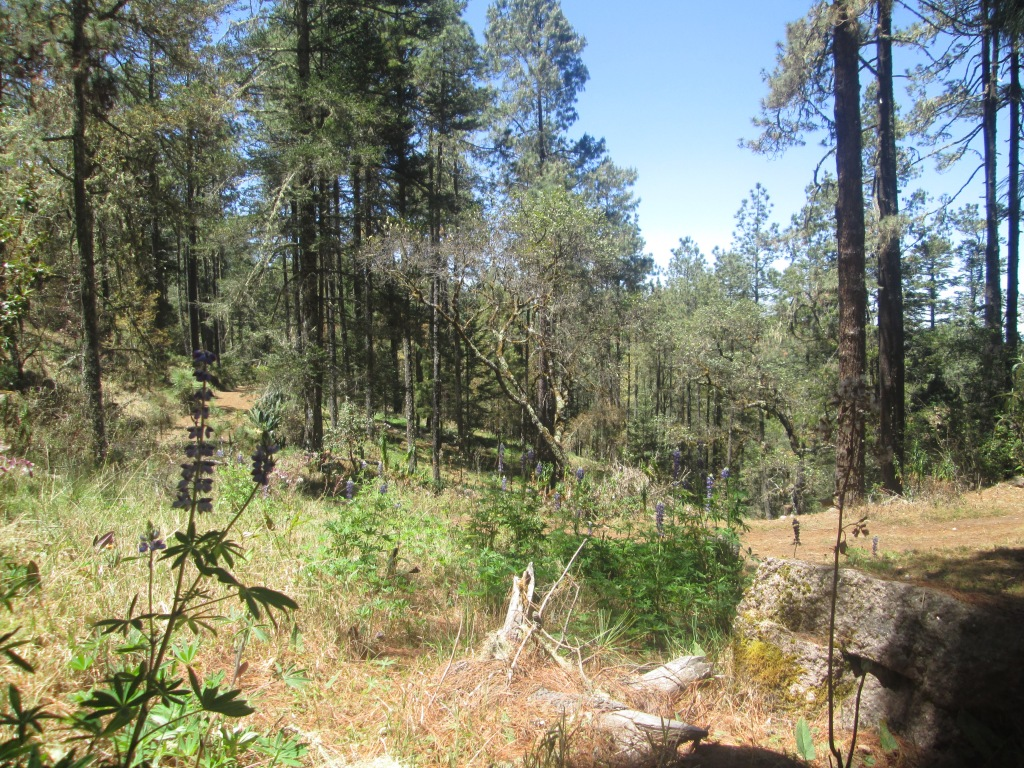 sierra norte meadows, mexico